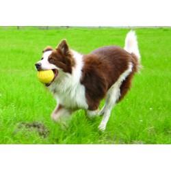 Doggles Chaleco Flotante