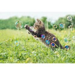 Crazy Cat Interactiv...