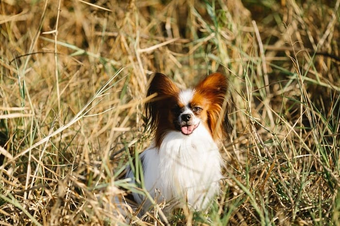 antiparasitarios caninos