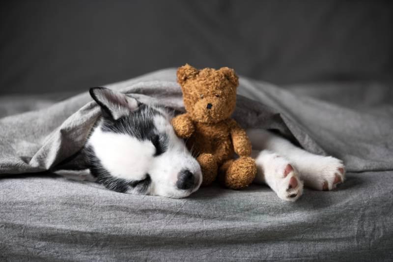Cachorro solo en casa con un juguete