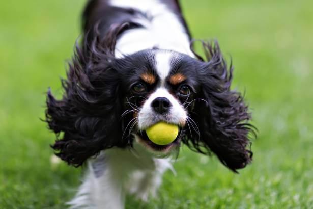 Perro con energía y pelaje sano gracias al Omega 3