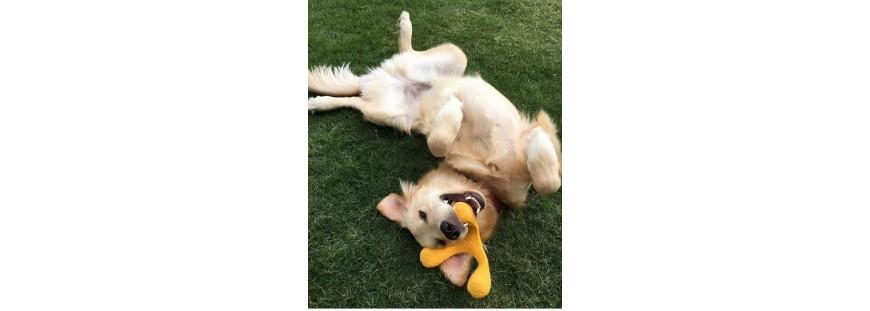 ¿Qué tipos de juguetes para perros son los más adecuados?