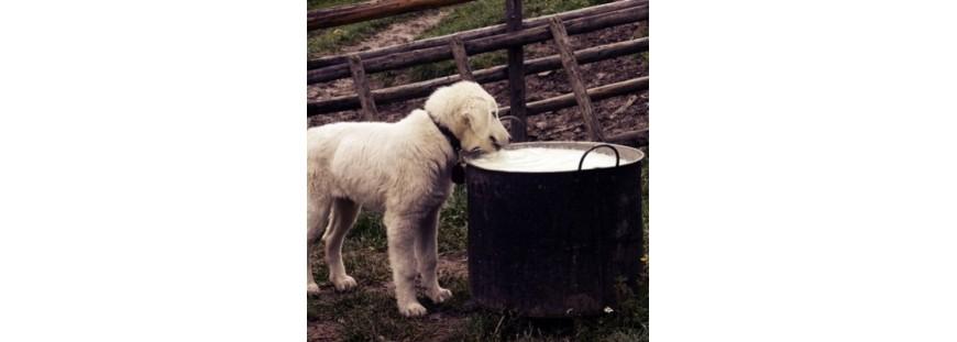 Leche maternizada para cachorros: ¿Cómo alimentar a un perro recién nacido?