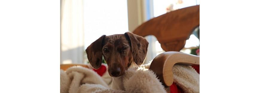 ¿Mi perro tiene ansiedad por separación?