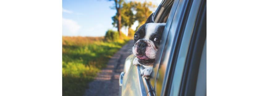 Diez consejos útiles para viajar con tu perro