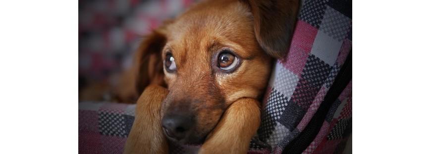 ¿Qué puedo hacer con mi perro con miedo a los ruidos?