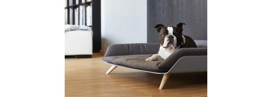▷ Como encontrar las mejores camas para perros